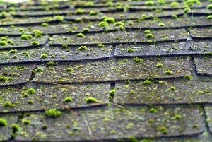 Roof Treatments